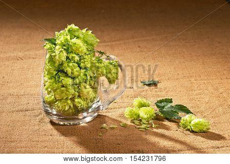 Hop cones in the glass of beer
