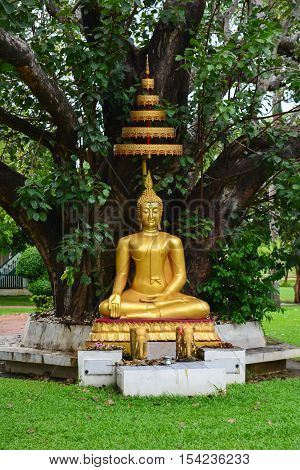Buddha under Bodhi tree in thai temple.