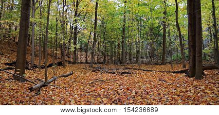 A clearing in a wood in autumn with fallen leaves