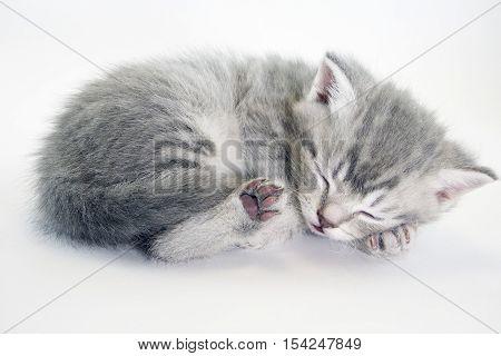 Little kitten sleeping. Grey tabby kitten. cute