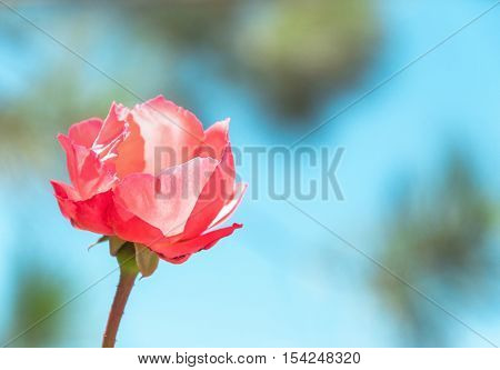 Red flower with blurred nature and blue sky background.