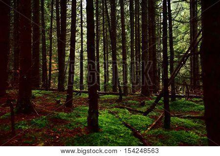 Dark Foogy Forest