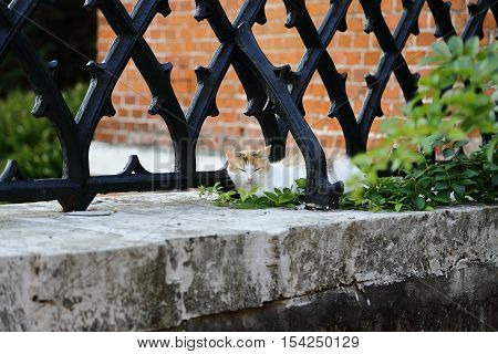 Happy cat resting near a fence on the parapet.