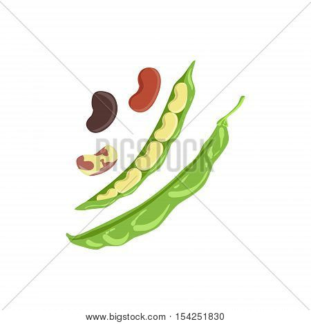 Beans Product Rich In Folic Acid. Simple Colorful Flat Vector Illustration On White Background.