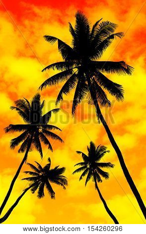 Silhouette of coconut tree - Stock Photo