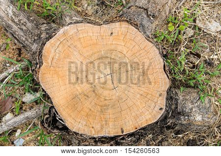 Top view of tree stump - Stock Photo