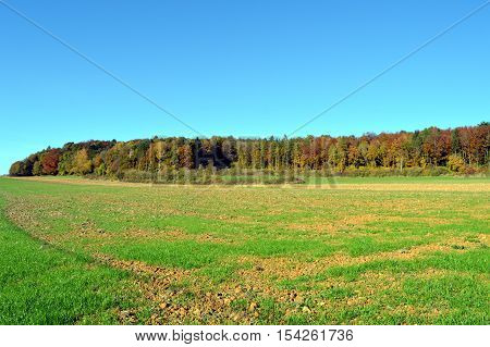 plow fields with autumn trees in the background