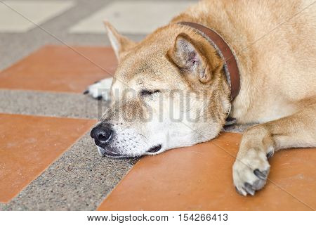 Poor dog, dog is sleep.dog is very sad.