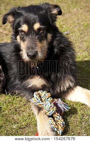 Yound Crossbreed Dog