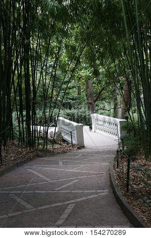 Bamboo Grove in the Crimean botanical garden. Stone bridge in the garden. The path in the garden. The walk in the garden.