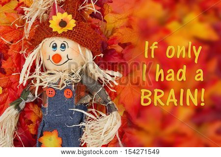 Message from a scarecrow Some fall leaves and girl scarecrow with text If only I had a brain