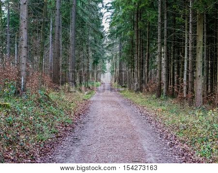 A road leading through a forest with trees on either side