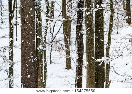 Trees standing on the snow covered ground during winter