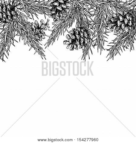 Fir tree and pine cone hand drawn vector square frame for winter and holiday decor. Botanical xmas and new year illustration. Great for greeting card, poster, banner
