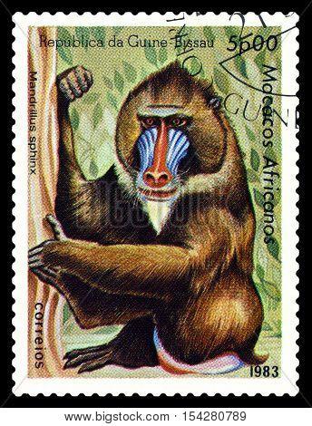 STAVROPOL RUSSIA - October 31 2016: a stamp printed in Guinea-Bissau (República da Guiné-Bissau) shows Mandrill (Mandrillus sphinx) circa 1983.