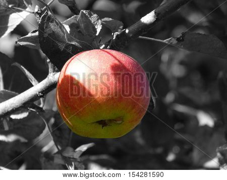 an image with apples. Let's see them all everything is fascinating and beautiful. capltivant.