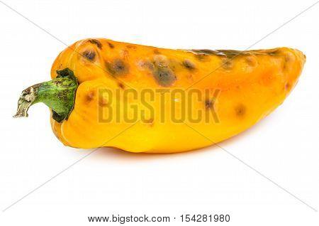Rotten bellpepper isolated on white background. Moldy vegetable.