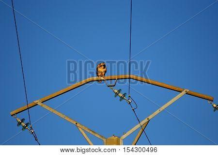 A raptor landed on a pole in a blue sky in Belgium