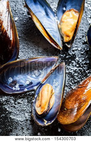 Closeup of fresh mussels on black rock