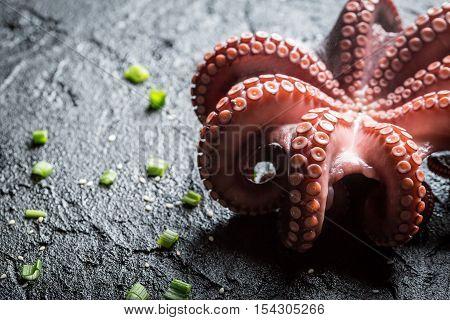 Closeup of freshly cooked purple octopus on black rock