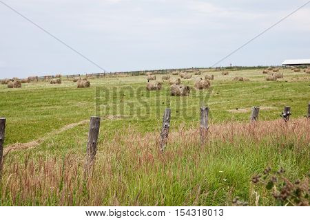 Round bail of hay in a field.