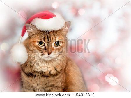 Beautiful Christmas Cat. Cat Wearing A Santa Hat