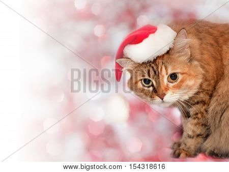 Christmas Background. Cat Wearing A Santa Hat