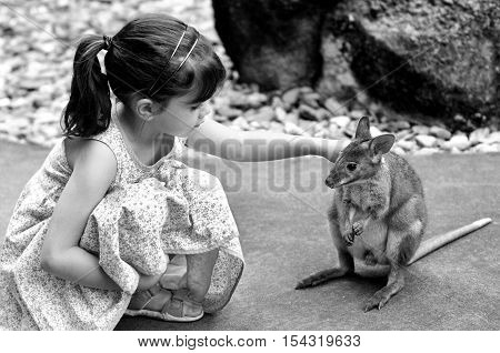 Little Child Petting A Wallaby In Queensland, Australia