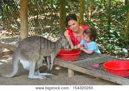 Mother And Child  Feed A Grey Kangaroo In Queensland Australia