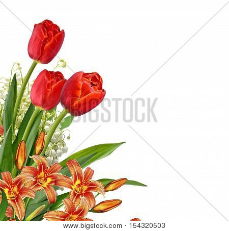 The branch of lilies of the valley flowers isolated on white background. tulip