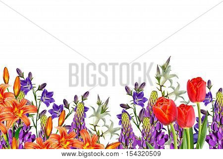 Flowers bells isolated on white background. lupine