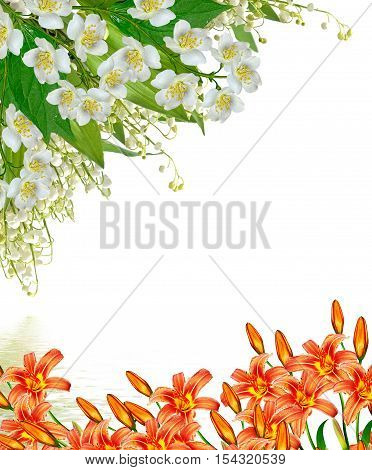 branch of jasmine flowers isolated on white background. lily