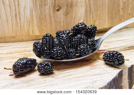Mulberry. Wild, Home Berries.