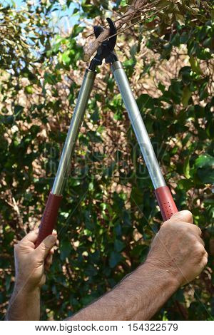Mans Hand Use A Tree Pruner