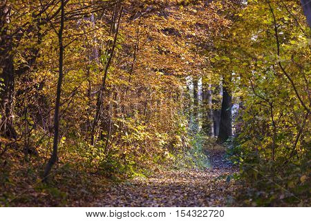 Autumn foliage in yellow red and brown colors fills a path through the woods
