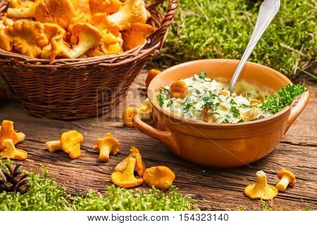 Chanterelles Mushroom With Cream And Parsley Are In The Forest