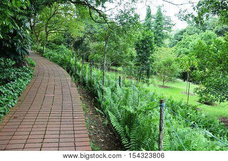 Red Brick Path In Singapore Botanic Garden