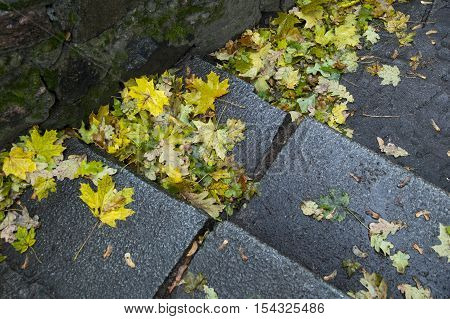 Yellow leaves lying on the steps in the autumn park