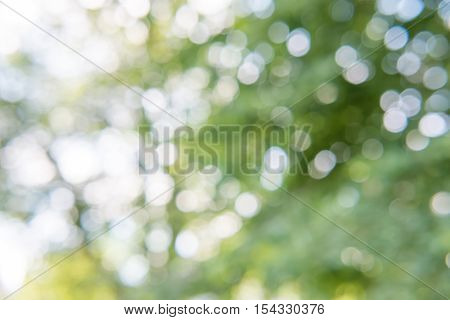 green bokeh from tree and sky background