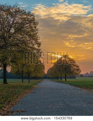 Tree lined path in the park in Autumn at sunset
