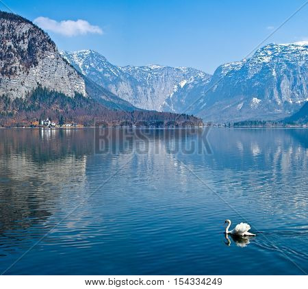View of the lake Hallstater See with white swan Austria