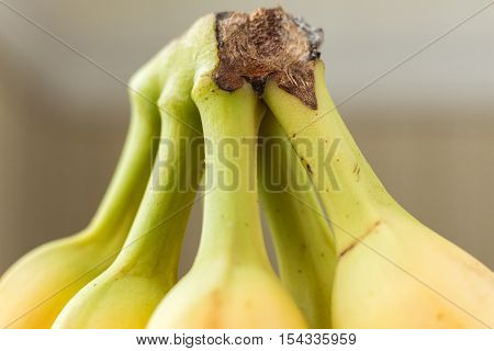 horizontal macro image of banana stems connected at the top with empty space for text or copy space.