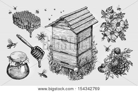 Honey, mead. Beekeeping apiculture bees sketch vector