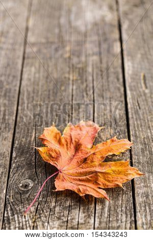 Colorful autumn leaf on old wooden table.