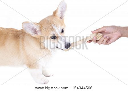dog getting a dog food isolated on white background