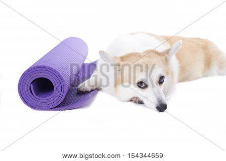 Dog sleeping on a yoga mat isolated on white background