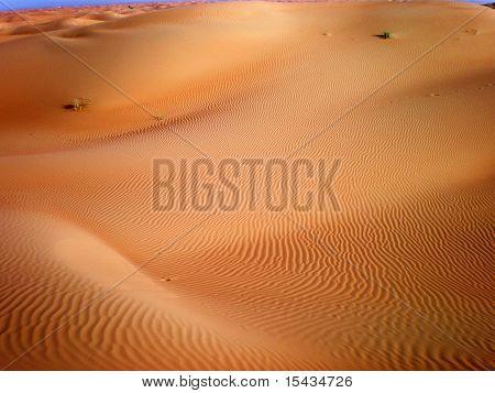 Desert Impression