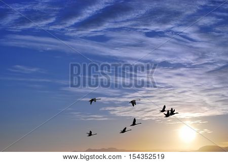 Flock of birds autumn migration over sunset landscape