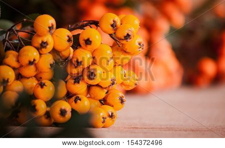 Pyracantha Isolated On Wood Background