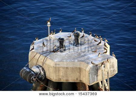bollard full with seagulls